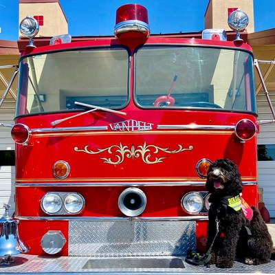 Birdie, of CAL FIRE, has been named Kidde's Fire Service Dog of the Year.